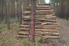 Sektor Drzewny - papierówka